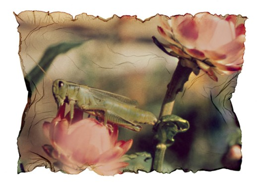Close-up of a grasshopper on a flower : Stock Photo