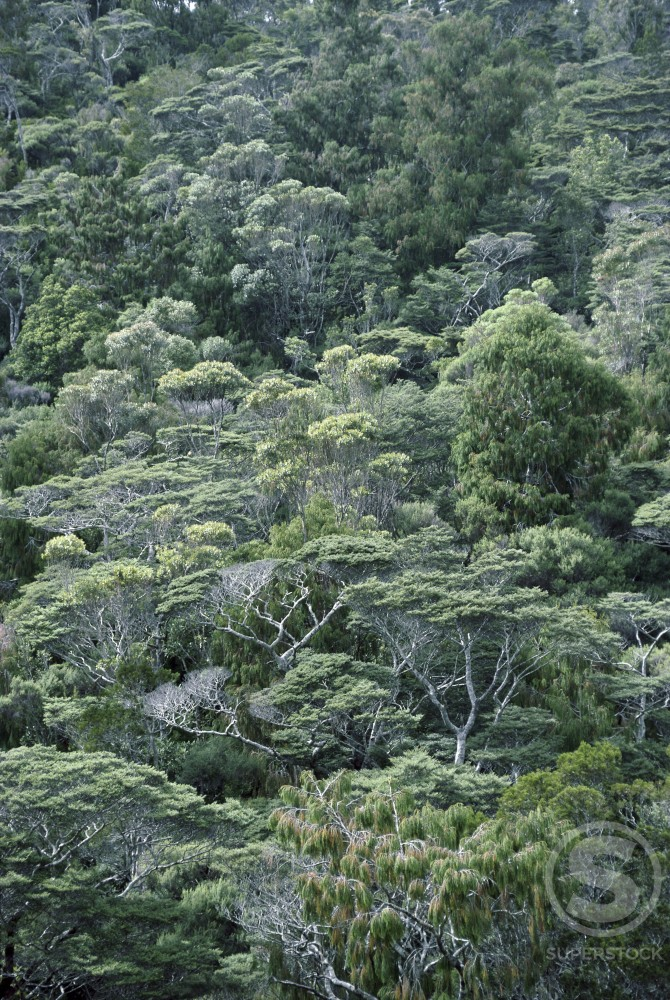 Stock Photo: 103-428A Tropical Forest