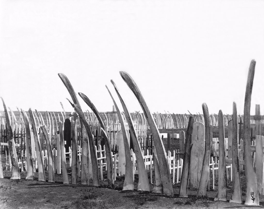 Stock Photo: 1035-1171 Whale bones fence around a Native American cemetery