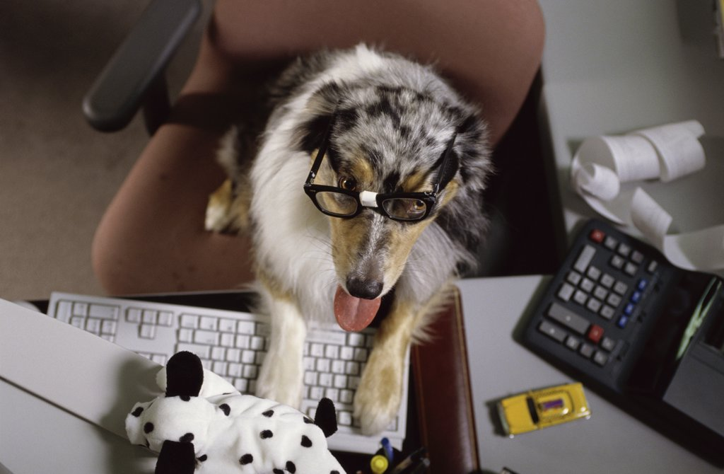 Stock Photo: 1042-2932 Dog using a computer