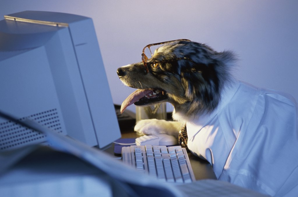 Stock Photo: 1042-2935 Side profile of a dog using a computer