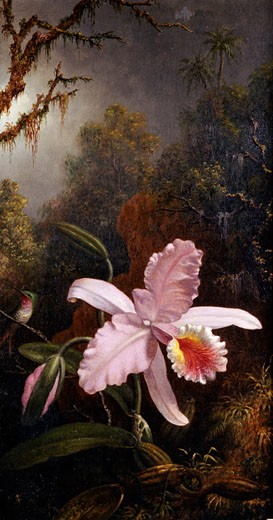 Stock Photo: 1075-127 Orchid and Hummingbird,  by Martin Johnson Heade,  USA,  Florida,  Jacksonville,  The Cummer Museum of Art and Gardens,  circa 1819-1904