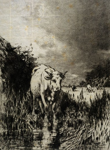 Stock Photo: 1075-386 Cows In The Brush 