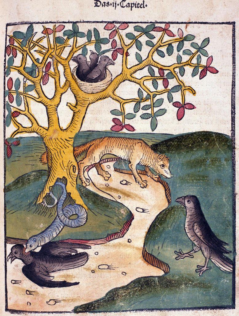 Snake biting bird with birds and Fox watching,  from Buch der Weisheit der Alten Weisen,  USA,  Illinois,  Chicago,  Newberry Library,  1483 : Stock Photo