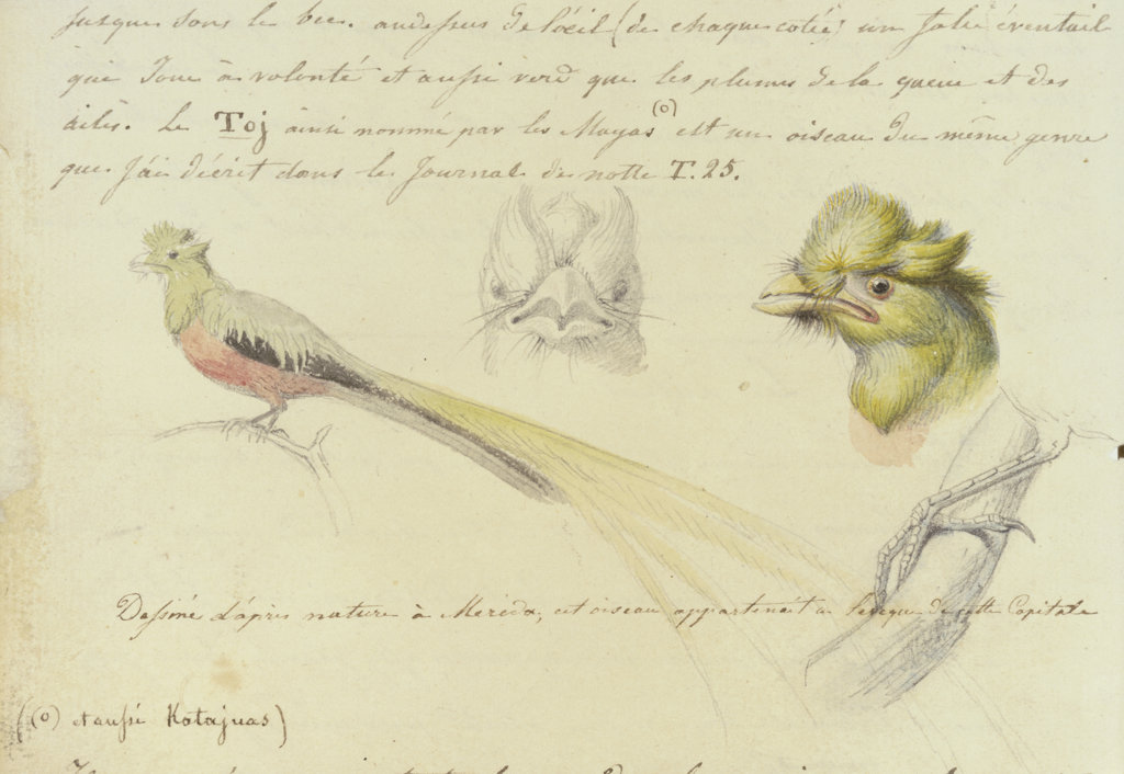 Stock Photo: 1095-219 Bird Sketches From Journal of Trip to Yucatan, Mexico in 1834