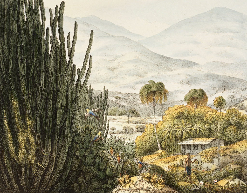 Stock Photo: 1095-551 Island of St. Catherine, Brazil