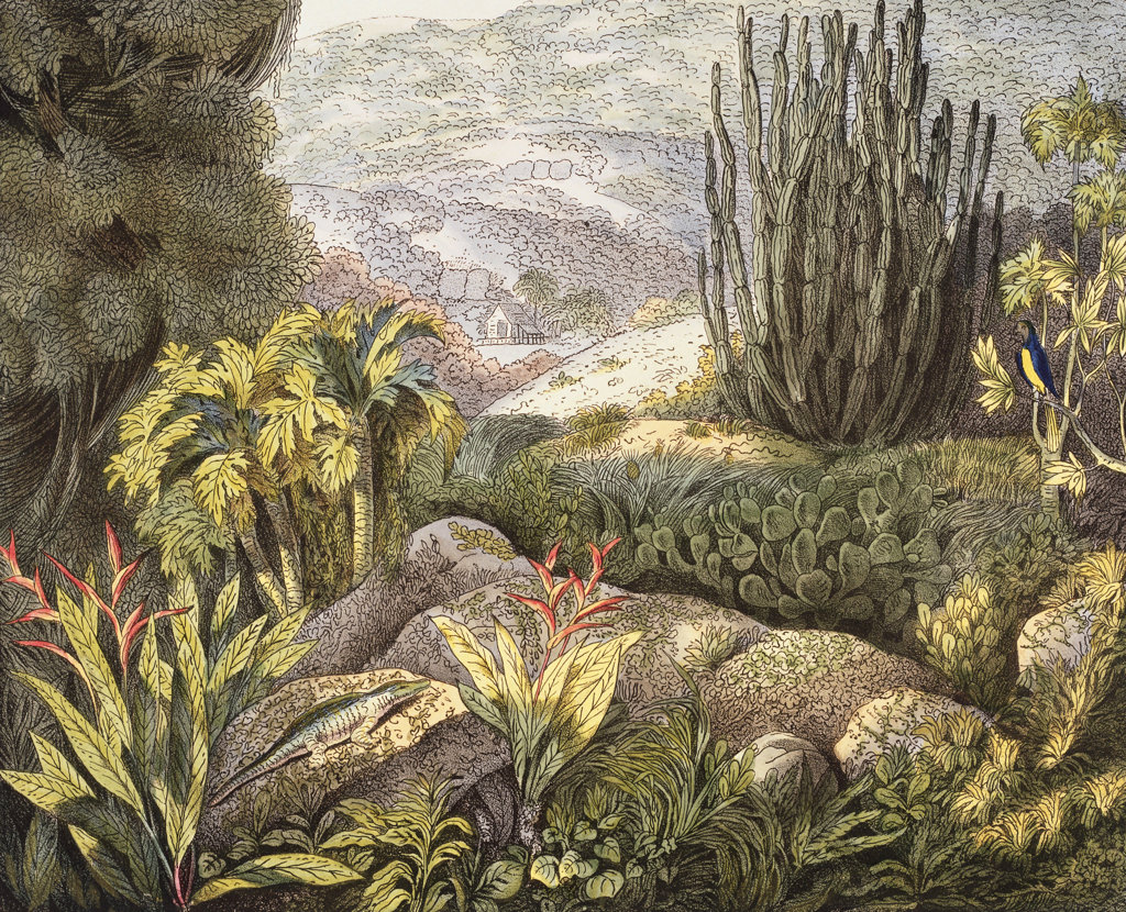 Stock Photo: 1095-552 Island of St. Catherine, Brazil