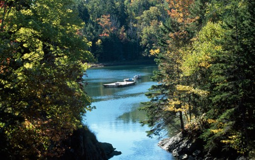 Stock Photo: 1096-2249 High angle view of a boat on water in a forest