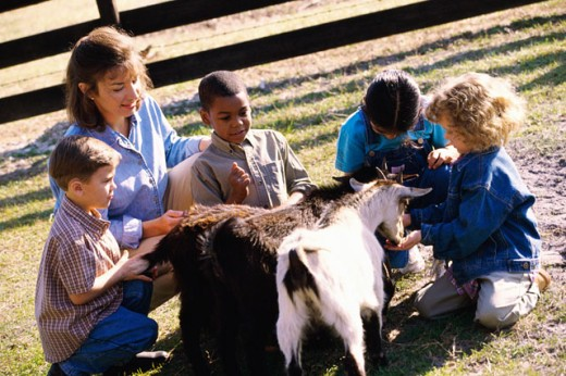 Female teacher sitting with her students and feeding goats : Stock Photo