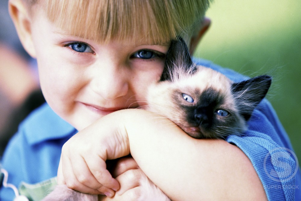 Stock Photo: 1099-1414 Portrait of a boy holding a Siamese kitten