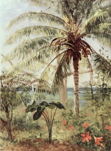 Stock Photo: 1100-152 Palm Tree, Nassau