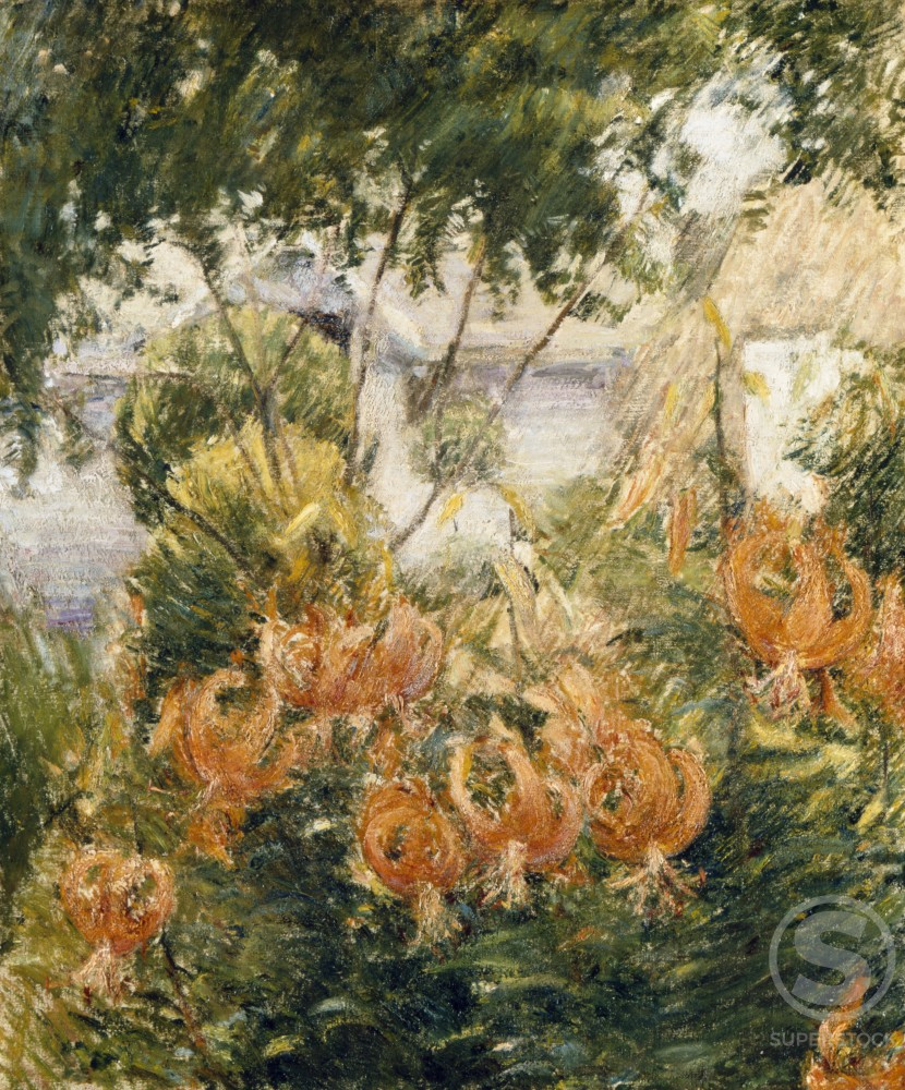 Stock Photo: 1100-669 Tiger Lilies 