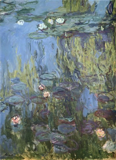 Stock Photo: 1100-966 Nympheas