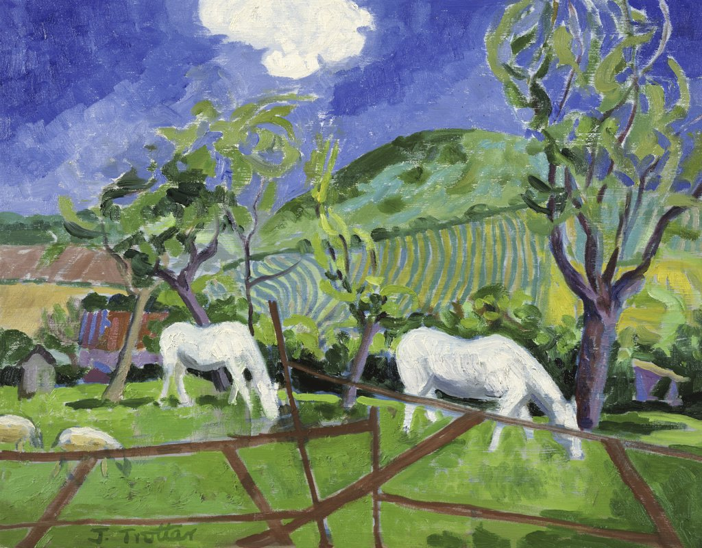 Stock Photo: 1101-536 Cotswold Ponies