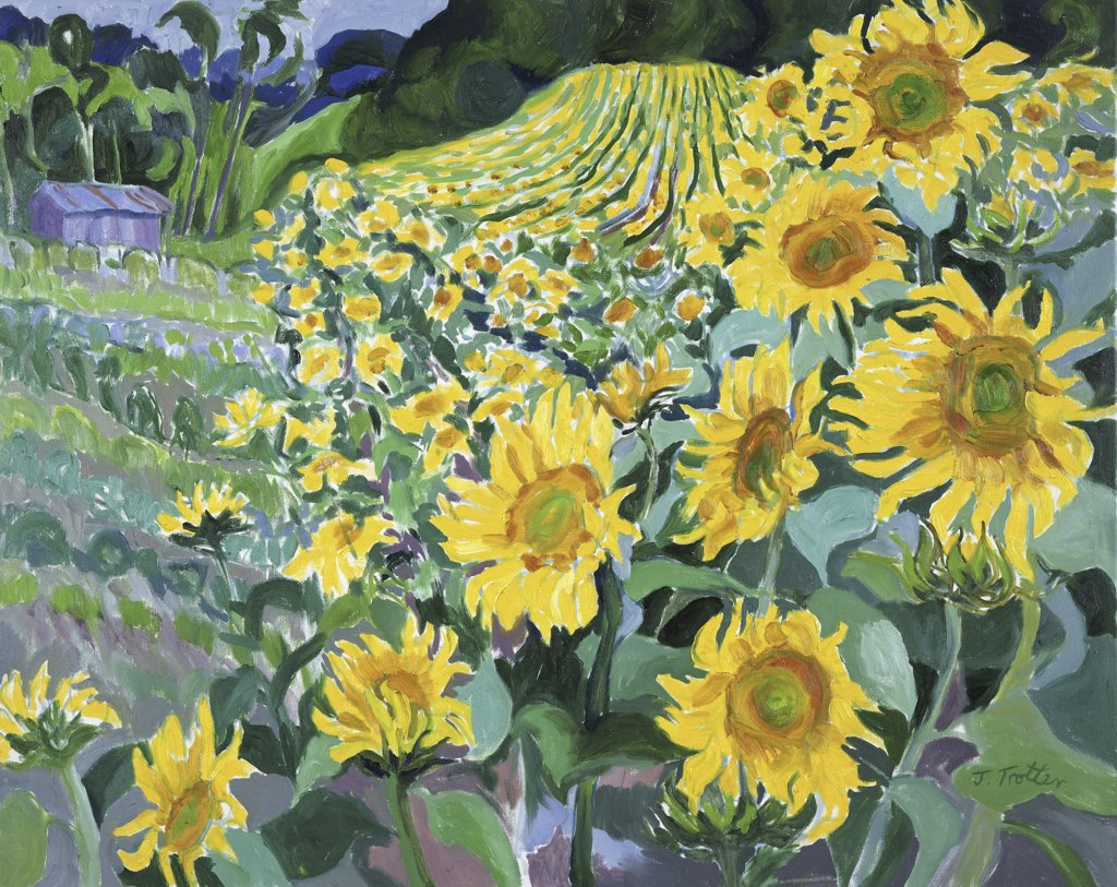Stock Photo: 1101-539 Sunflowers, Provence