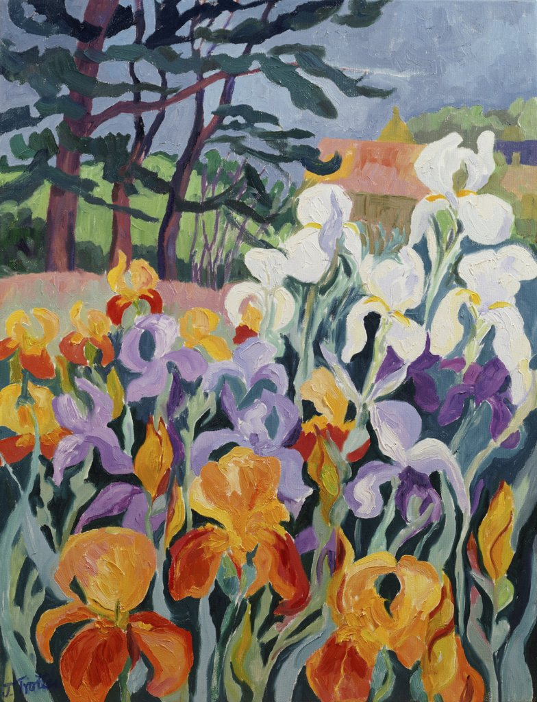 Stock Photo: 1101-576 Iris