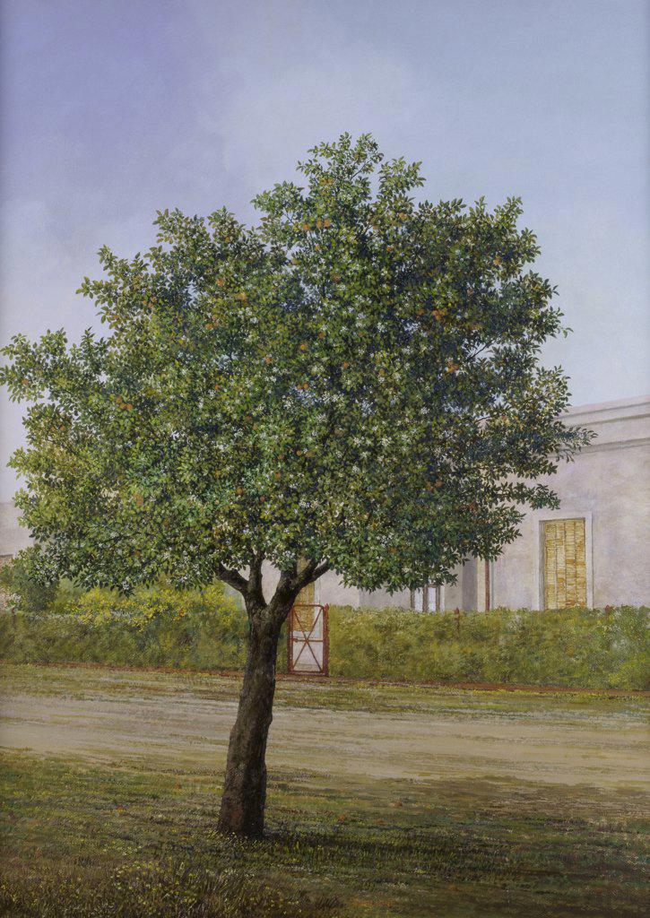 Orange Tree in Bloom (Naranjo en Flor) 1995 Carlos Scaglione (b.1943/Argentinean) Oil on canvas Zurbaran Galeria, Buenos Aires : Stock Photo