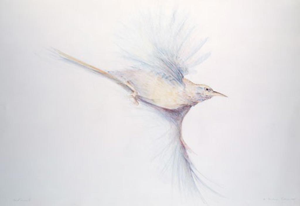 Bird in Flight - Bird Series II 1981 Freshman Brown (20th C. American) Prismacolor on Paper : Stock Photo