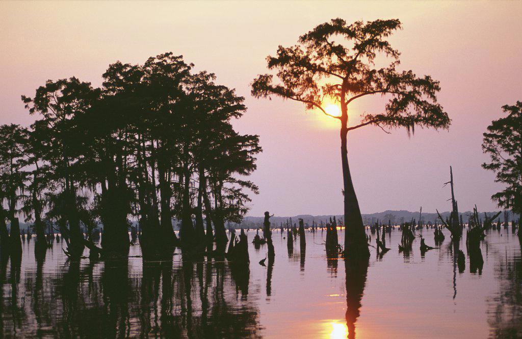 Stock Photo: 1119-709 Atchafalaya Bayou Louisiana USA