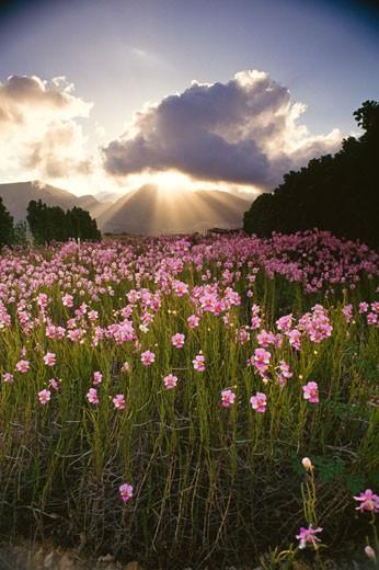 Stock Photo: 112-6833 Orchid Farm,  USA,  Hawaii,  Maui