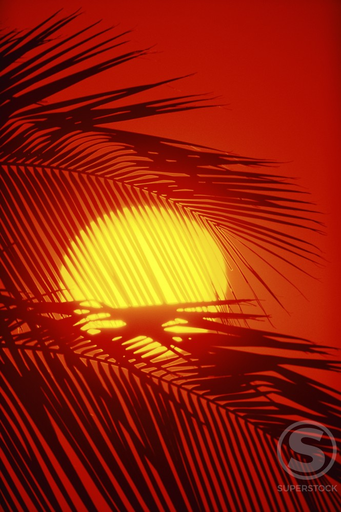 Stock Photo: 112-9129A Silhouette of palm leaves at sunset
