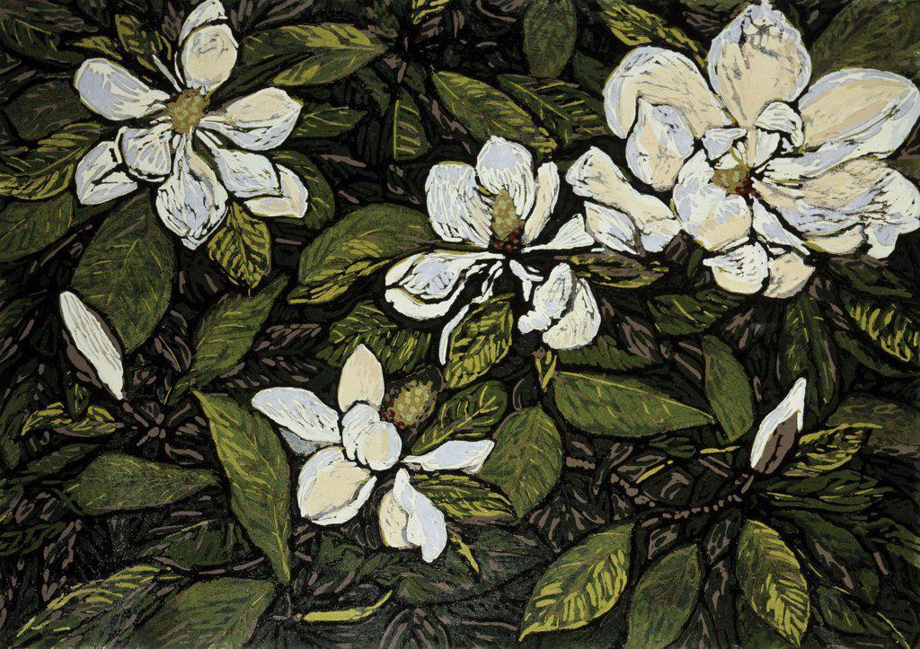 Magnolia  Barry Wilson (b.1961/American) Woodcut print : Stock Photo