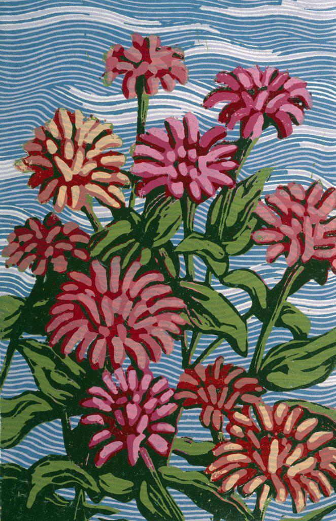 Zinnias by Barry Wilson, (born 1929) : Stock Photo