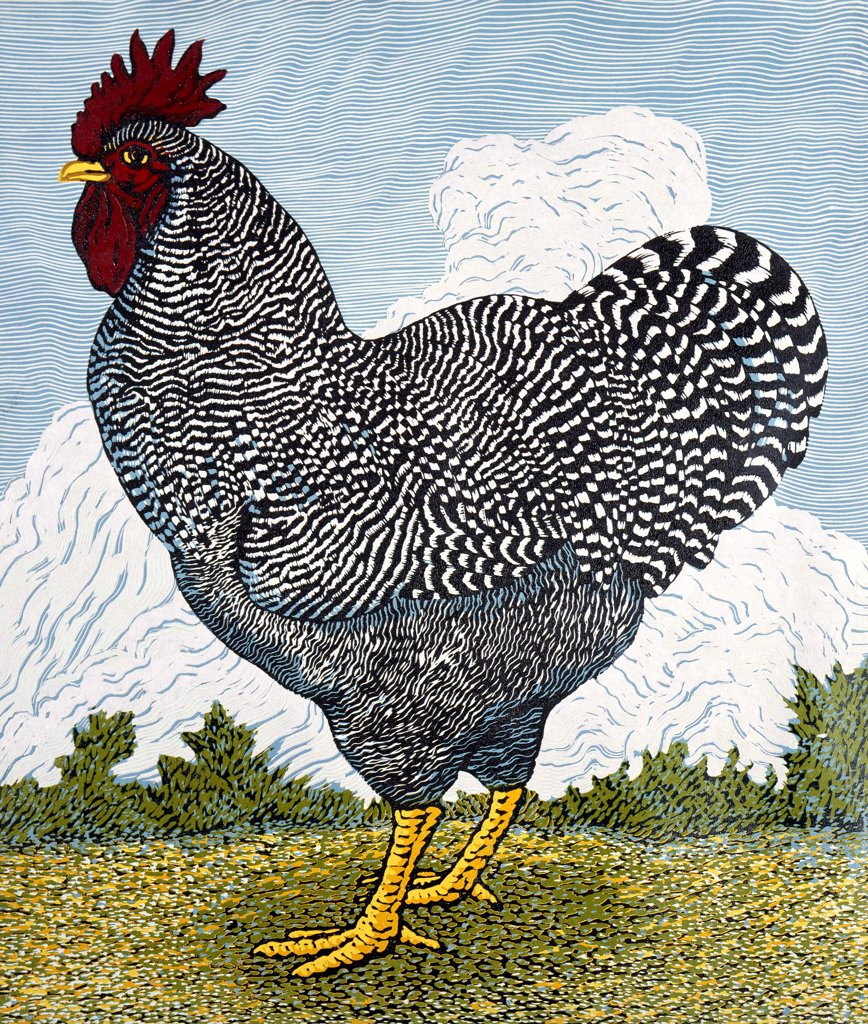 Stock Photo: 1154-45 Barred Rock Rooster Barry Wilson (b. 1961 American)