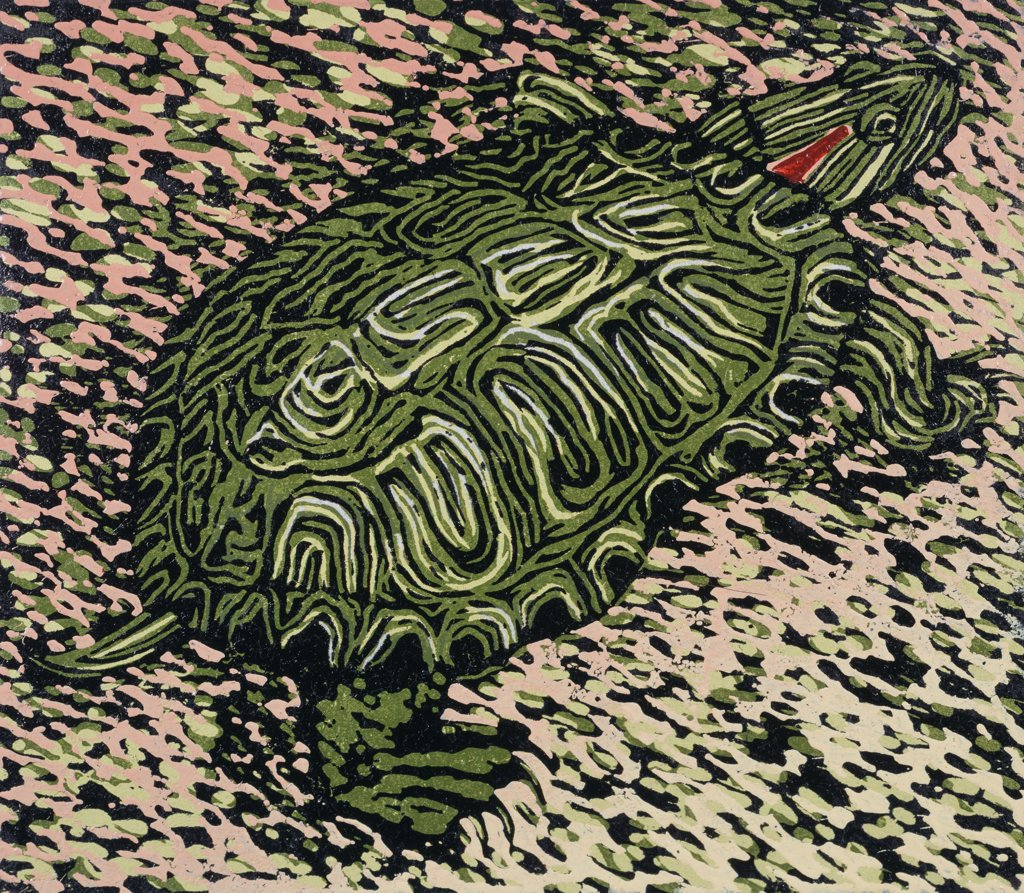 Stock Photo: 1154-47 Crawling Turtle II 