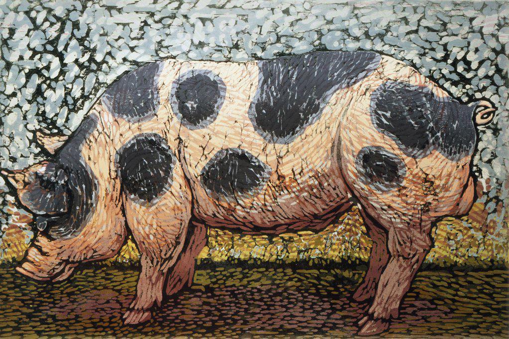 Stock Photo: 1154-63 Pig Barry Wilson (b.1961/American) Woodcut print