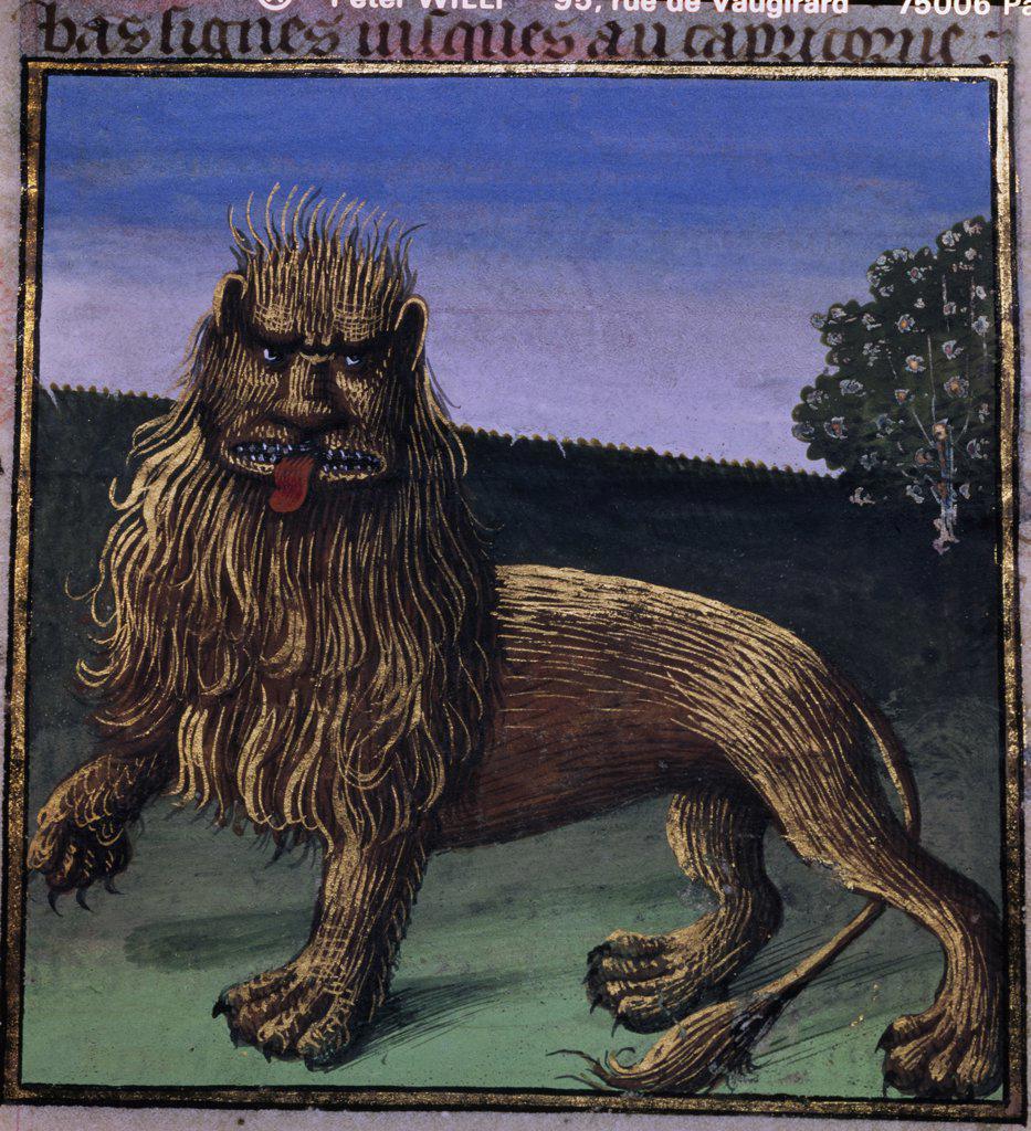 Stock Photo: 1158-2469 The Lion, manuscript, France, Paris, Bibliotheque Nationale
