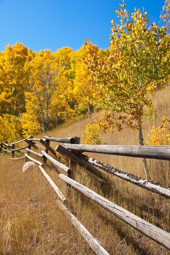 Stock Photo: 1176-638 Fence and aspen trees in a field, Steamboat Springs, Colorado, USA