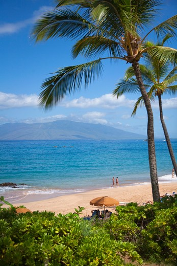 Stock Photo: 1176-669 Palm trees on the beach, Maluaka Beach, Makena, Maui, Hawaii, USA