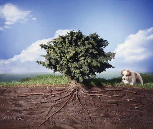 Stock Photo: 1195-360 Dog walking near a tree