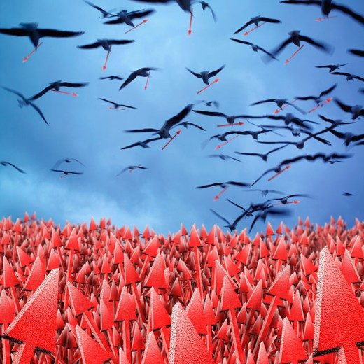 Flock of birds flying over a field of arrows : Stock Photo