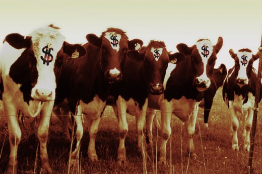 Stock Photo: 1222-225 Dollar signs on the head of cows