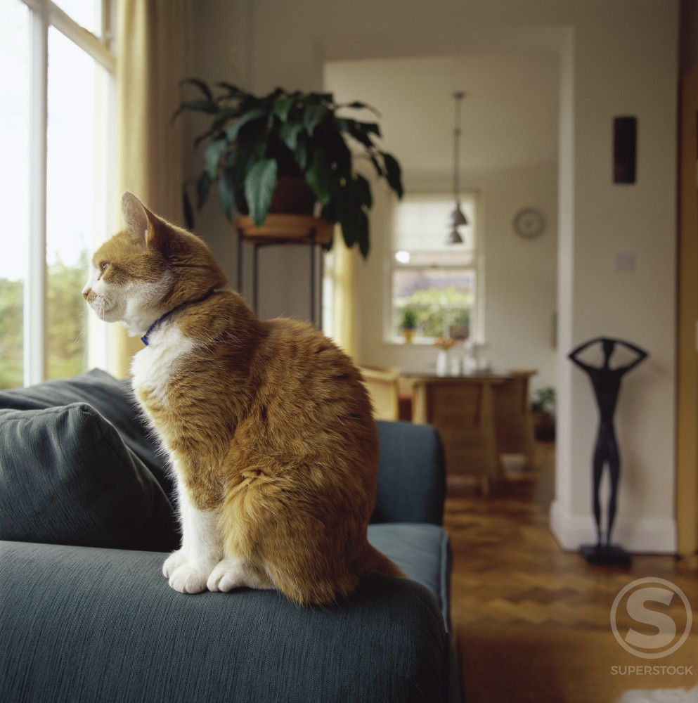 Stock Photo: 1236-147 Side profile of a cat sitting on a couch