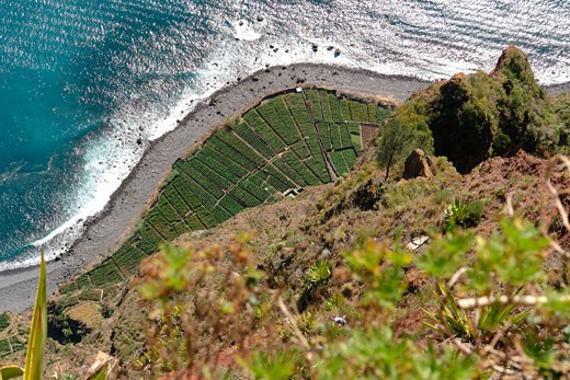Aerial view of agricultural fields at the coast, Cabo Girao, Madeira, Portugal : Stock Photo