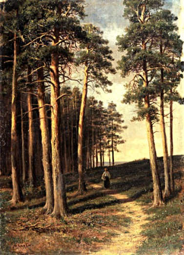 Piney Woods by Michael Klodt von Jurgensburg, (1832-1902), Russia, Vologda, Vologda Regional Art Gallery : Stock Photo