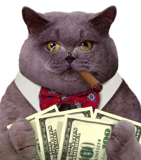 Close-up of a fat cat smoking a cigar wearing a bow tie and eye glasses and holding bills of money : Stock Photo