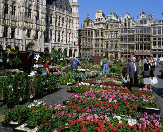 Stock Photo: 1269-1036 Flower market in a town square, Grand Place, Brussels, Belgium