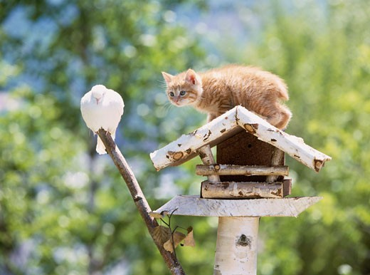 Kitten on a birdhouse and looking at a pigeon : Stock Photo