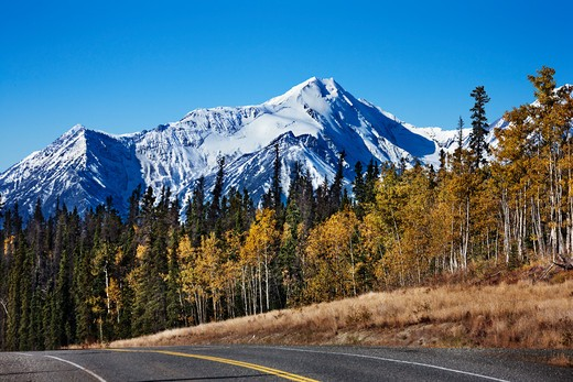 Highway passing through a forest, Alaska Highway, Canada : Stock Photo