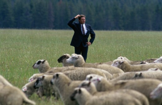 Stock Photo: 1284R-1559 Businessman standing in a field with sheep