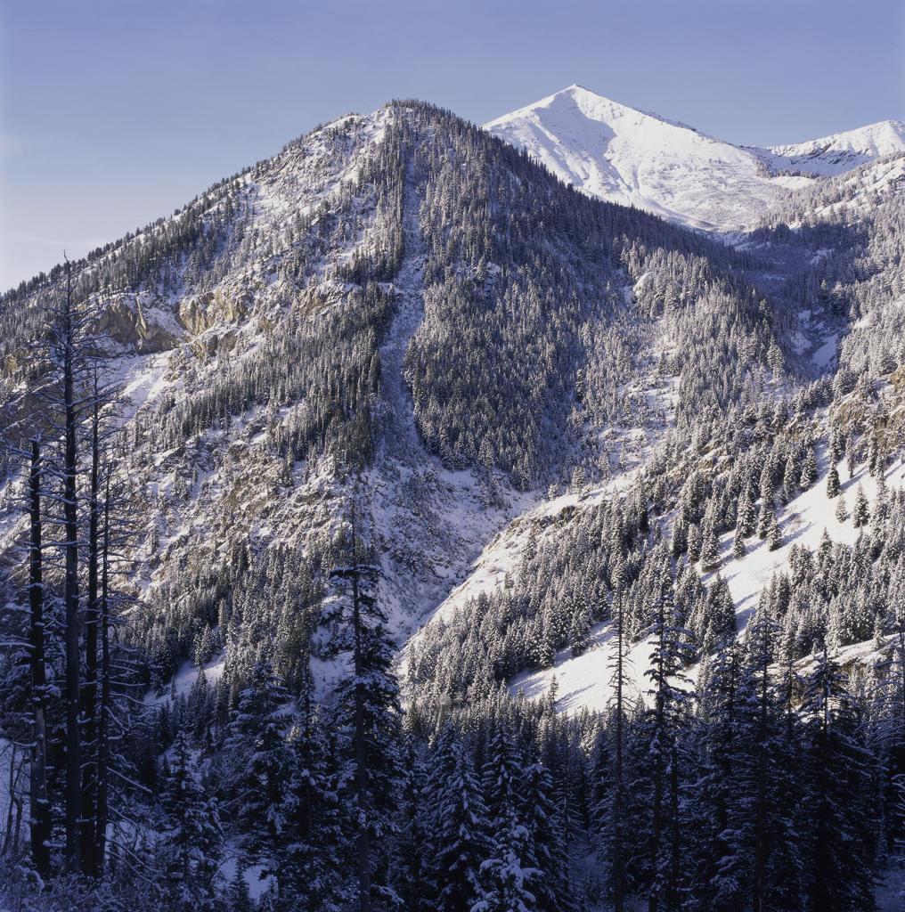 Mountain range and trees : Stock Photo
