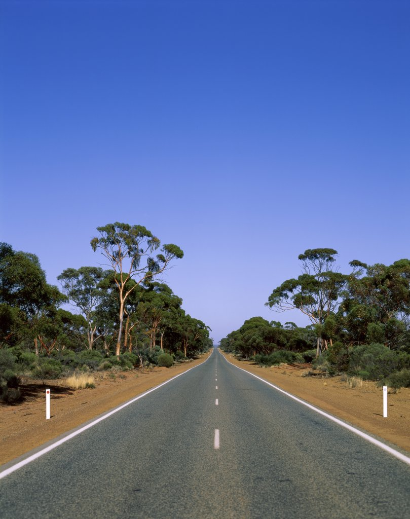 Stock Photo: 1288-397 Road passing through a forest, Western Australia, Australia