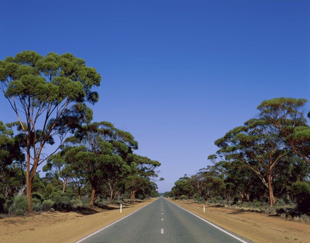 Stock Photo: 1288-398 Trees along a road, Western Australia, Australia