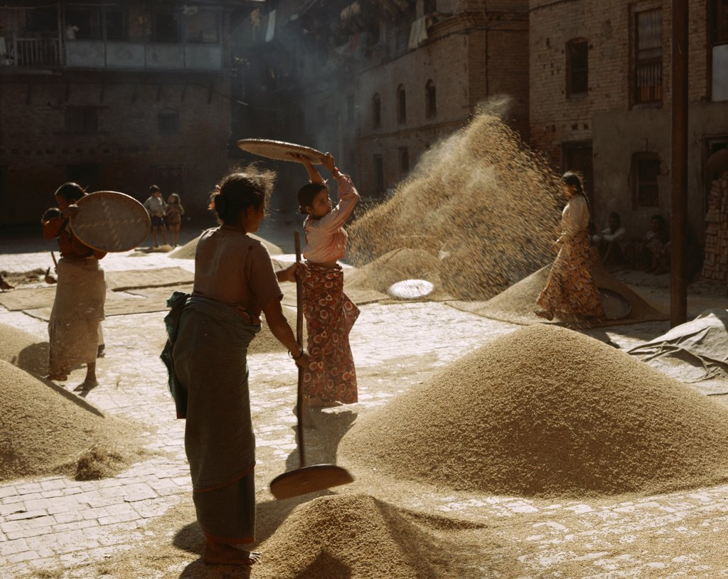 Four mid adult women cleaning food grain, Bhaktapur, Nepal : Stock Photo