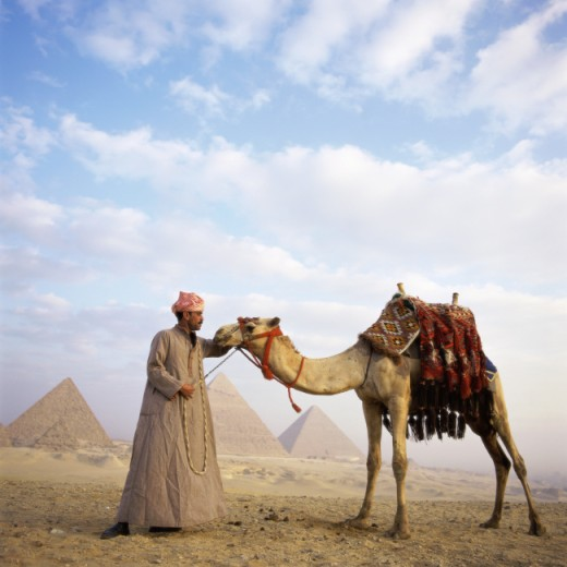 Man holding a camel with the Pyramids in the background, Giza, Egypt : Stock Photo