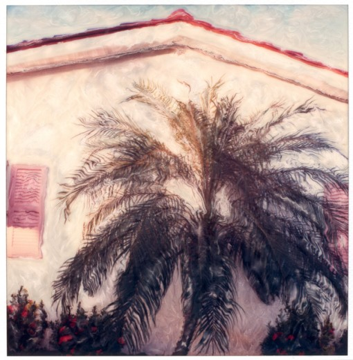 Palm tree in front of a house, Clearwater, Florida, USA : Stock Photo